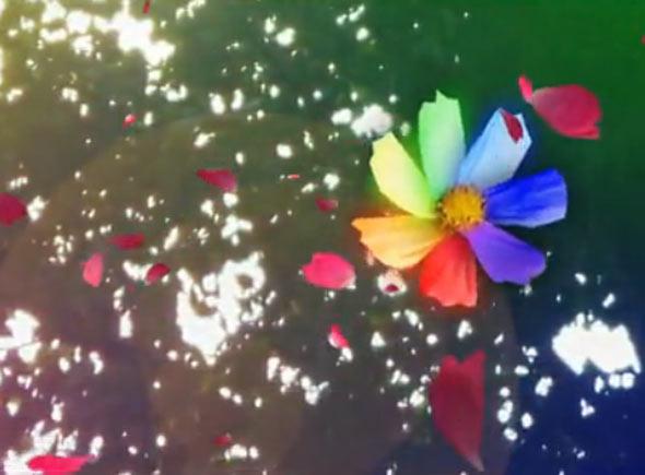 com 宽1024x1024高      七色花矢量素材 七色花模板下载 七色花 层叠